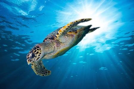 turtle-450x300